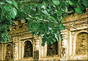 Holy Sites Of Buddhism Bodh Gaya Place Of Enlightenment
